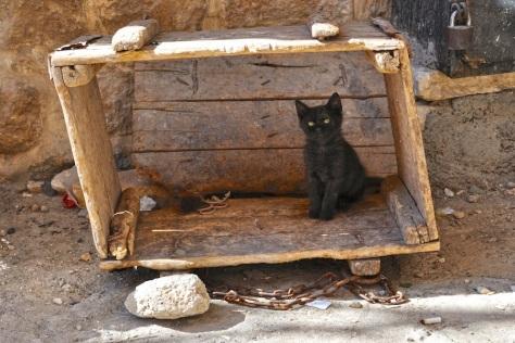 Naughty Kitten